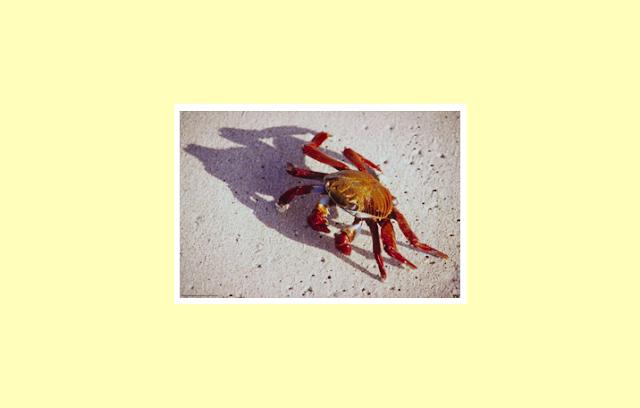 Arthropoda sebagai Invertebrata