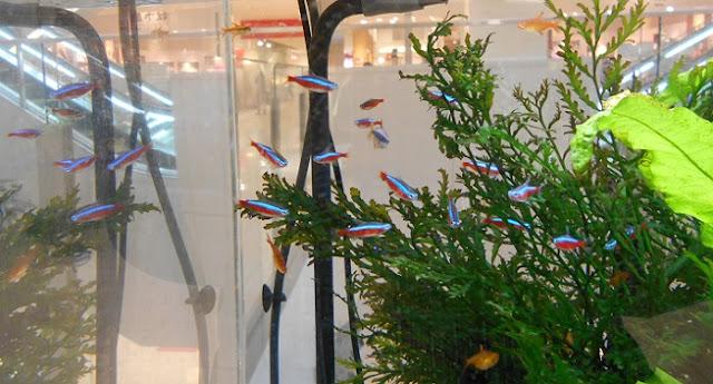 水槽の中の熱帯魚2