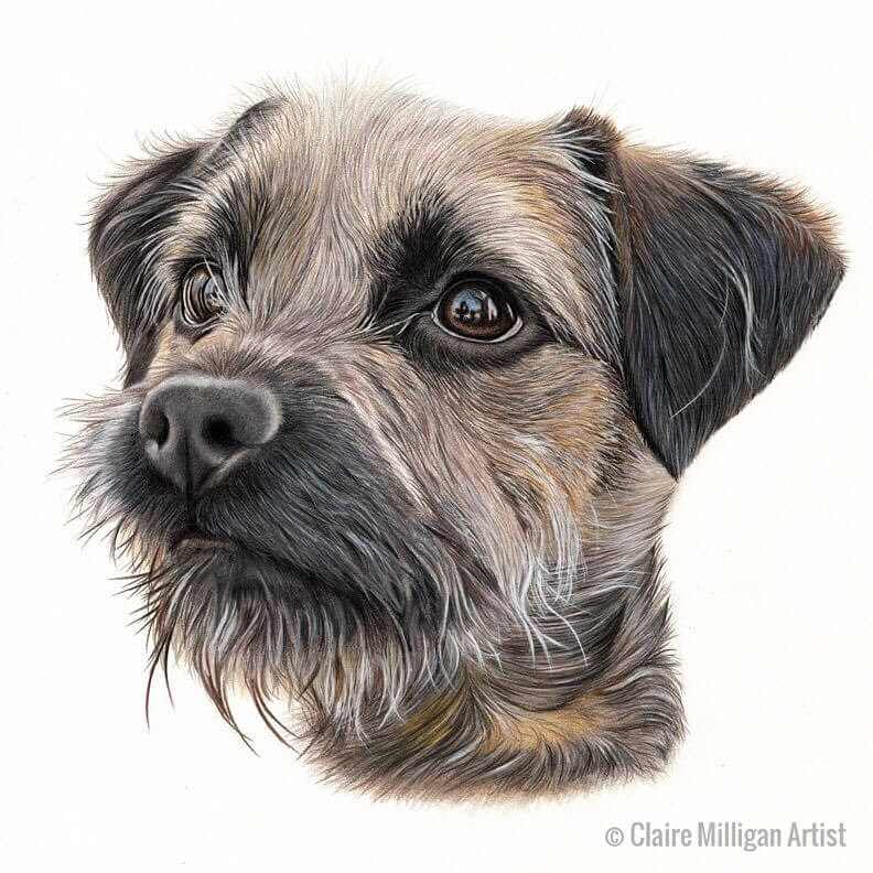 09-Border-Terrier-Claire-Milligan-www-designstack-co