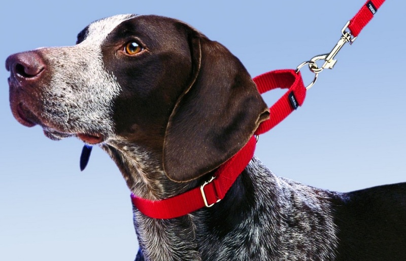 Dog-Martingale-Collar