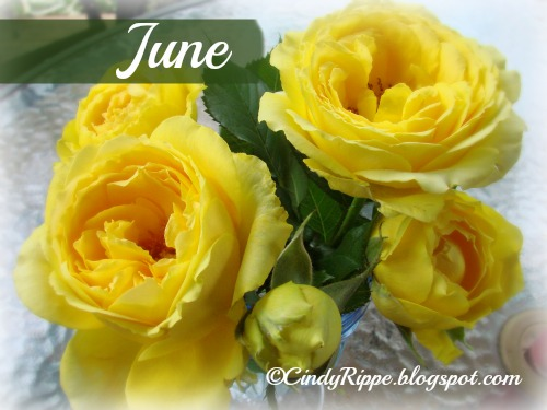 Yellow Roses, June birth flower, meanings of flowers, Happiness, Proverbs 16:20, Florals-Family-Faith, Cindy Rippe