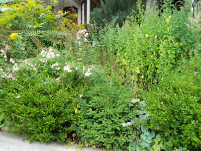 Toronto Summer Garden Cleanup in Koreatown Before by Paul Jung Gardening Services--a Toronto Organic Gardening Company