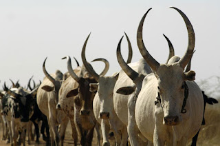 X-Raying Military Operation Against Cattle Rustling In Zamfara 2