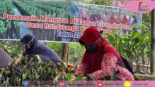 Brebes,Jokowi,menteri lingkungan dan kehutanan, mangrove, berita Brebes,Brebes Terkini,Bupati Brebes,Seputar Brebes,