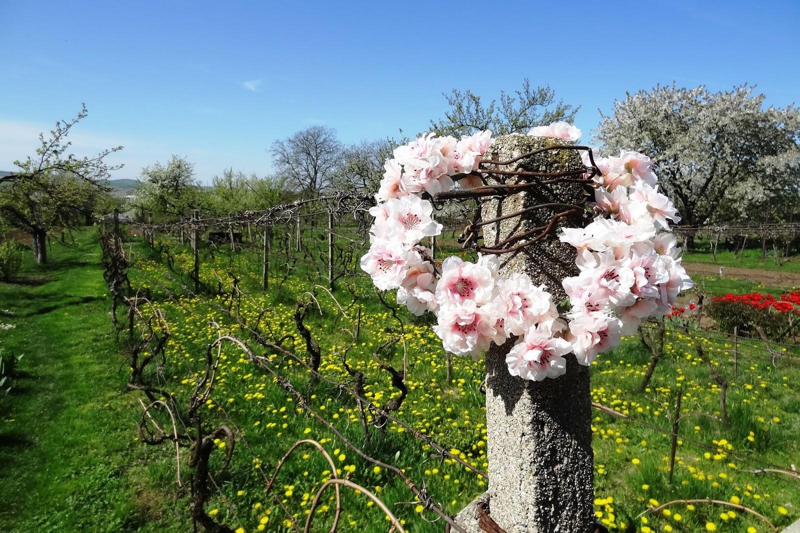 5b926340c60 Retro šaty Blanka Straka  DIY květinový věneček do vlasů