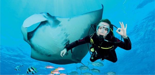 Bơi lội, chụp hình và ngắm nhìn cá nạng hải