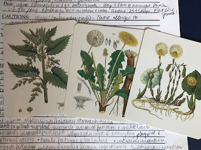 photo of healing plant cards: nettle, dandelion, coltsfoot