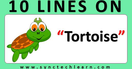 essay writing on turtle