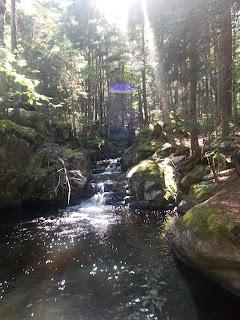 Forêt, ruisseau, Vallée-Bras-du-Nord, l'été