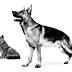 Gana productos Royal Canin para tu mascota