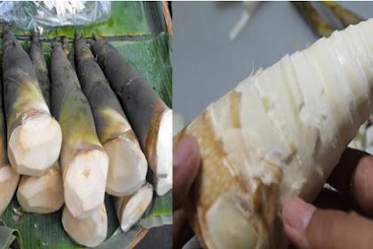Ternyata Tunas Bambu Memiliki Manfaat Bagi Tubuh.