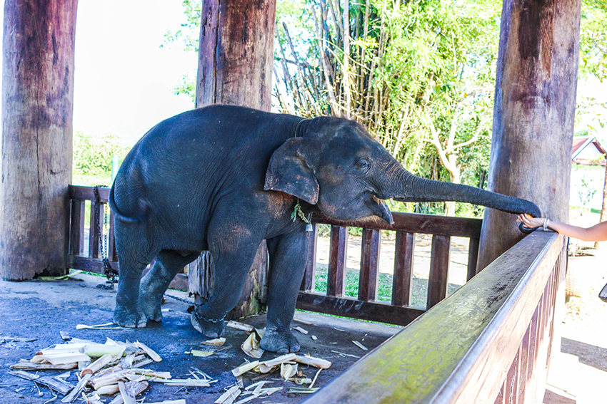 Luang Prabang Elephant Camp