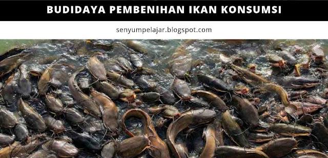 Budidaya pembenihan ikan konsumsi