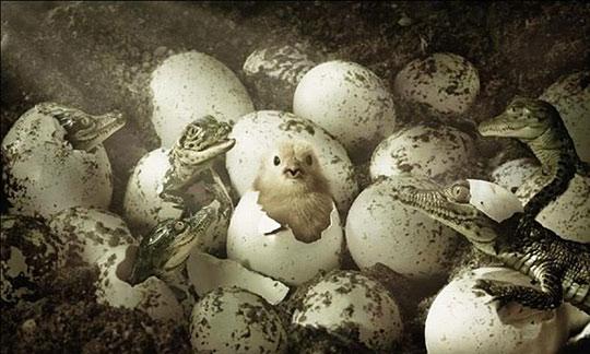 wrong nest
