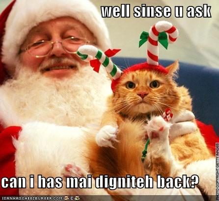 Christmas In July Cat Meme.True Book Addict True To Books Cat Thursday Cats And
