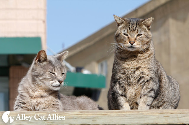 Two feral cats enjoy some sunshine on the NJ boardwalk