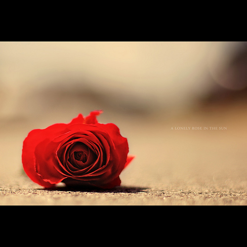 I M So Lonely: Rose Day Special