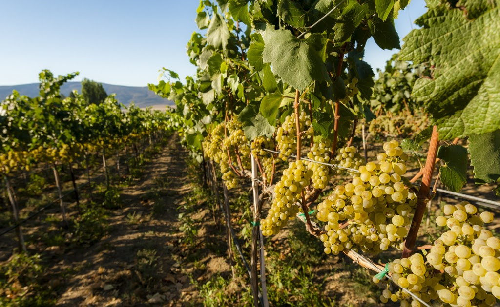The Walls Purchases Yakima Valley's French Creek Vineyard