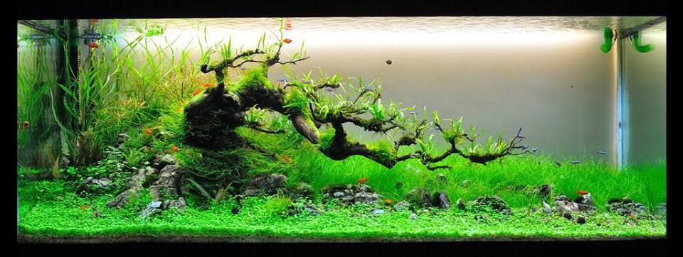Hồ thủy sinh bon sai buộc dương xỉ