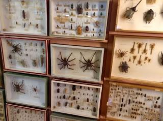 Museo de Ciencias Naturales el Carmen de Onda.