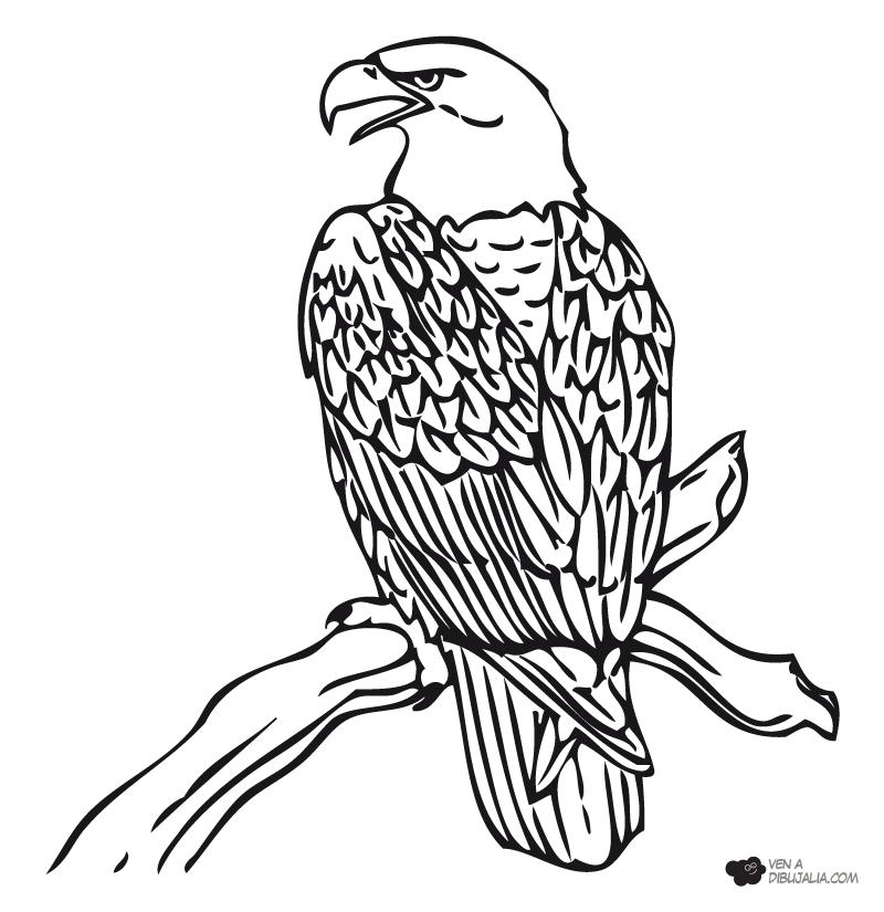 Dibujo De Aguila En Png Imagui