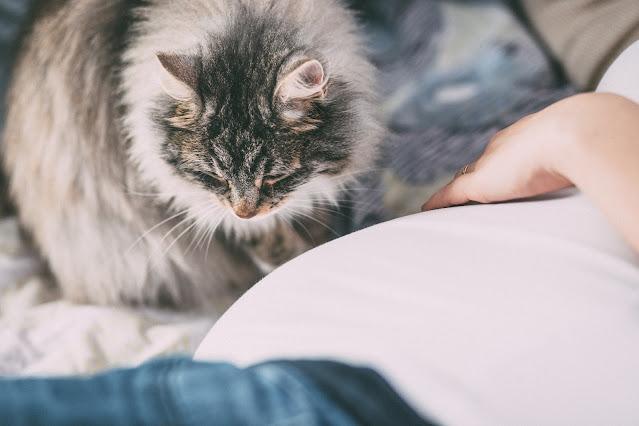 Cat Allergies: A Better Understanding