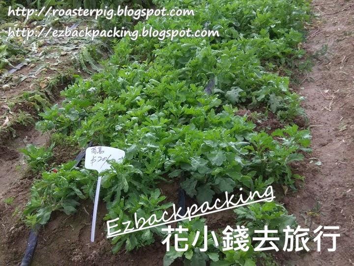香港蔬菜果園