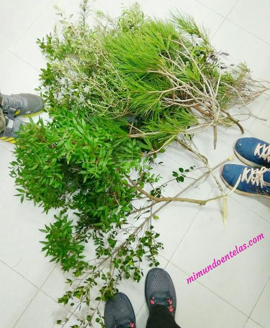 actividades con niños, recoger plantas en la naturaleza