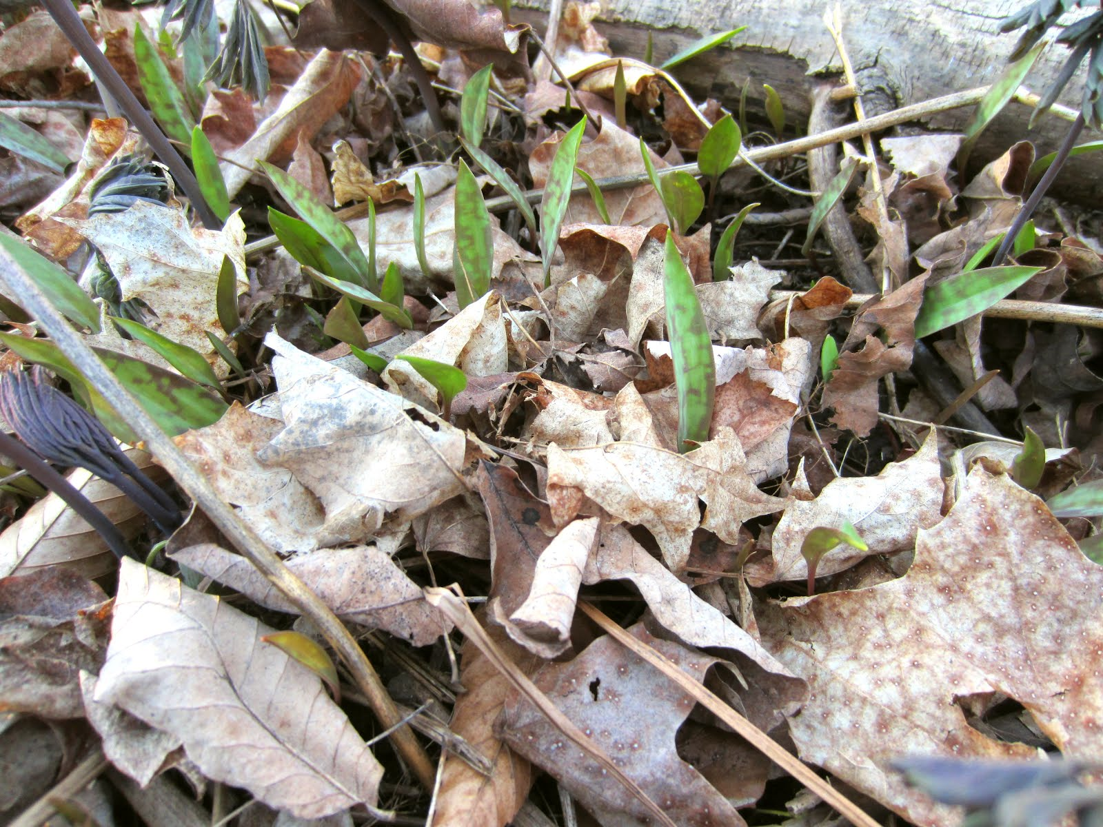 Unstuffed Easter Lilies