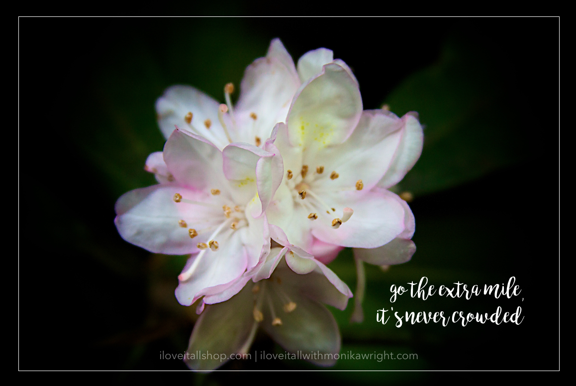 #go the extra mile #extra mile #inspirational quote #determination #crowded #rhododendron #flower #nature photography #nature