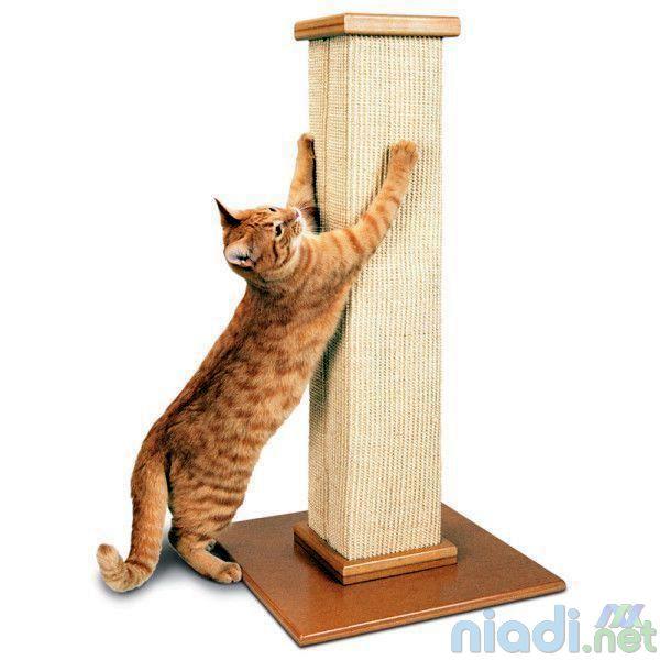 apa saja faktor yang mempengaruhi pertumbuhan kucing