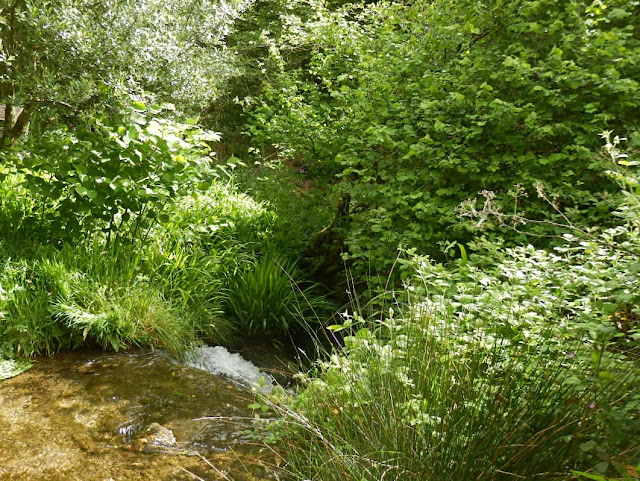 Stream and trees, Cornwall