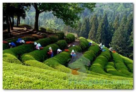 usaha yang kegiatannya mengolah alam sehingga mampu memberikan manfaat lebih bagi konsumen.