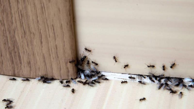 Evdeki Karıncalardan Nasıl Kurtuluruz?