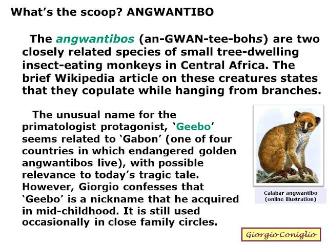 primate; monkey; angwantibo; Arctocebus spp.; fantasy; gravity; Giorgio Coniglio