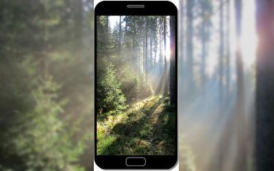 Forêt de Conifères - Fond d'Écran en QHD pour Mobile
