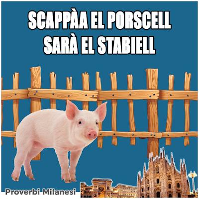 Scappàa el porscell sarà el stabiell   Traduzione:    Scappato il maiale, chiusa la stalla   Significato:    Porre, troppo tardi, rimedio ad un problema
