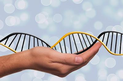 DNA:  Pengertian, Konsep, Struktur, Cara Kerja, Konsep Genetika, dan Proses Mutase