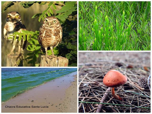 Ejemplos de los reinos de los seres vivos-Chacra Educativa Santa Lucía