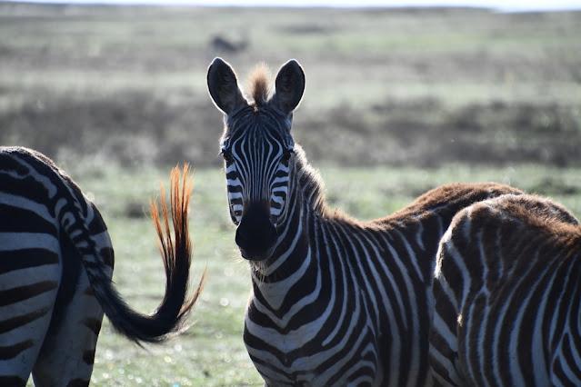 Cratera Ngorongoro Tanzânia
