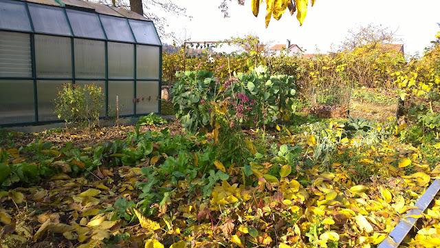 Herbstlaub im Gemüsebeet (c) by Joachim Wenk