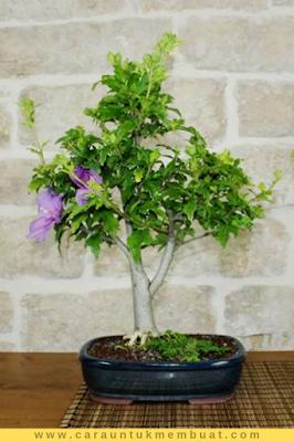 Bonsai Bunga Sharon