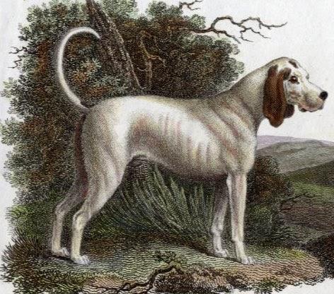 14 Extinct Dog Breeds You Will Never Get To Pet