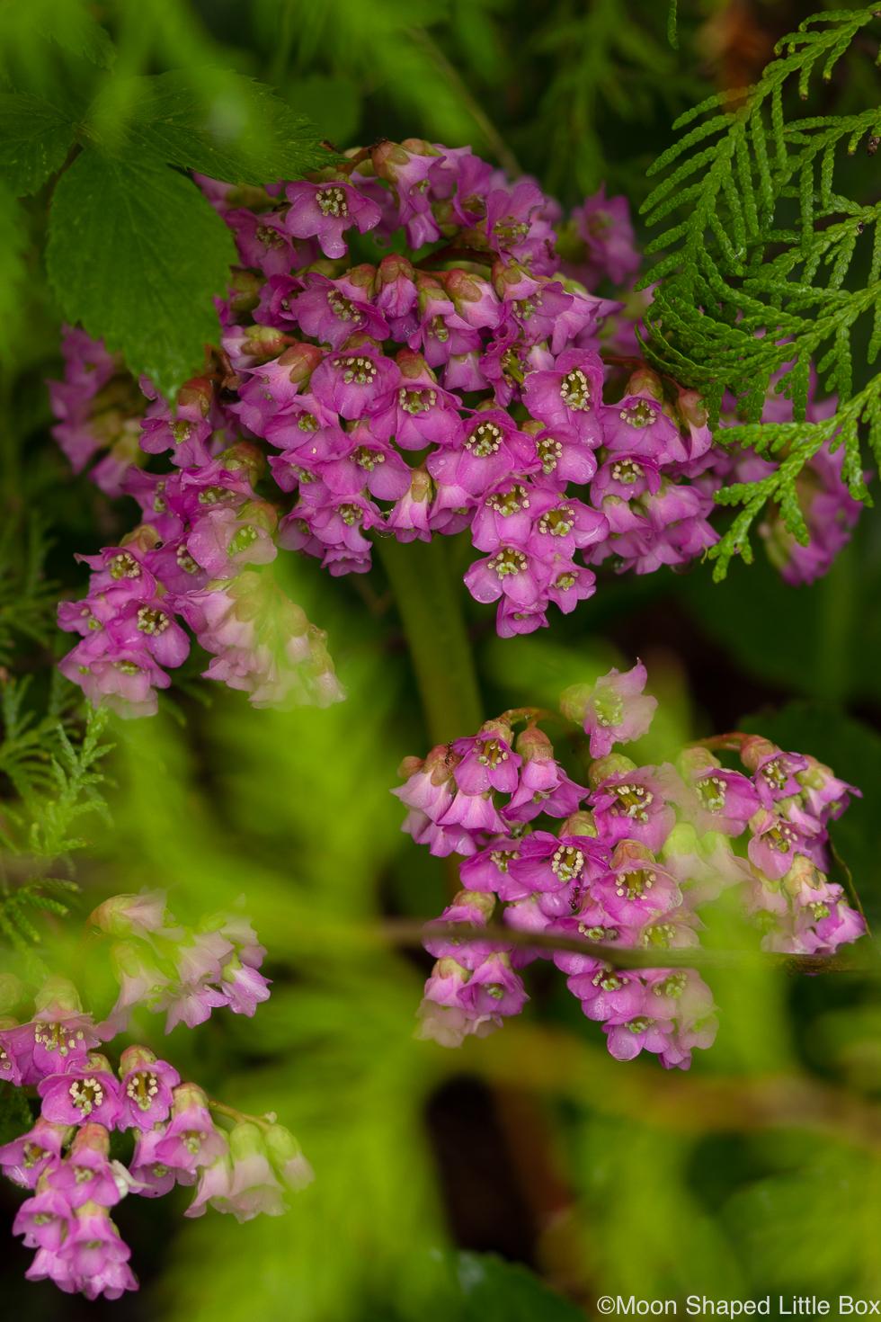 puutarhan kukintoja