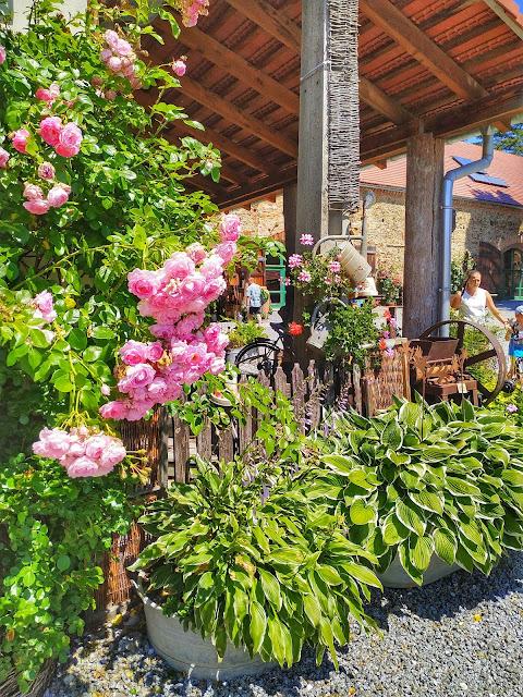 Ogród botaniczny w Wojsławicach, o randze Arboretum