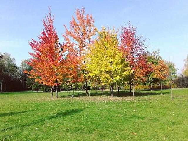 5 rzeczy, które uwielbiam w jesieni!