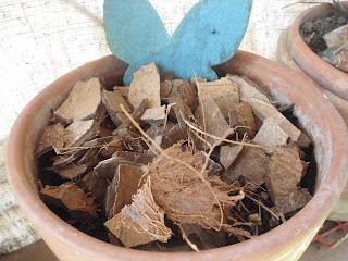 pacciamatura vasi biodegradabile fai da te
