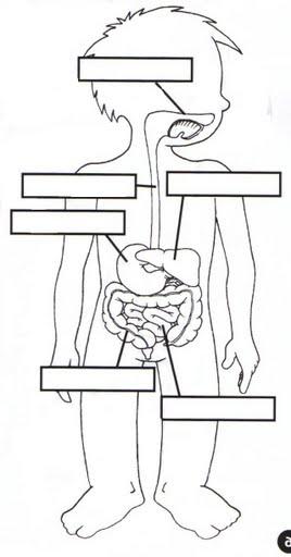 2th Grade: Human Body Sistem ~ Laboratorio de Inglés José
