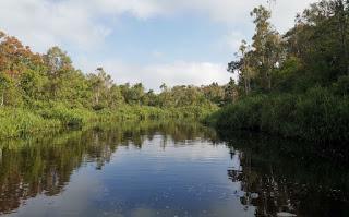 Indonesia, Borneo, Parque Nacional Tanjung Puting.
