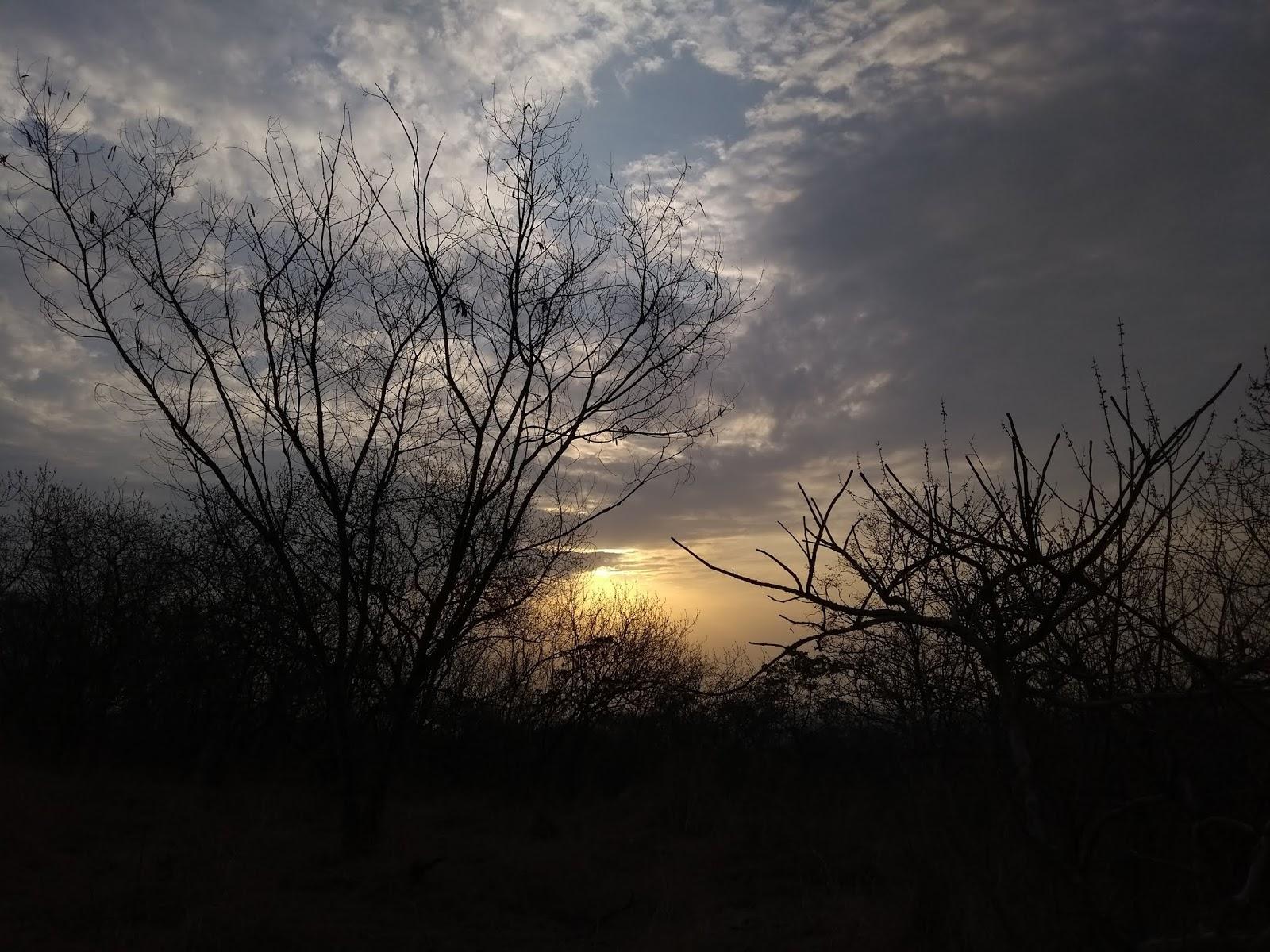 Vetal tekdi, Pune hills, Deciduous